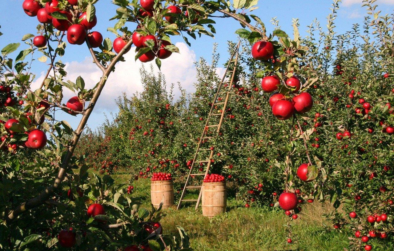 5 kluczowych narzędzi w każdym ogrodzie – inspiracje Fiskars