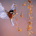 Stołówka dla skrzydlatych przyjaciół