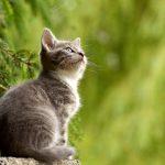 Specjalne menu dla wymagającego kociego podniebienia