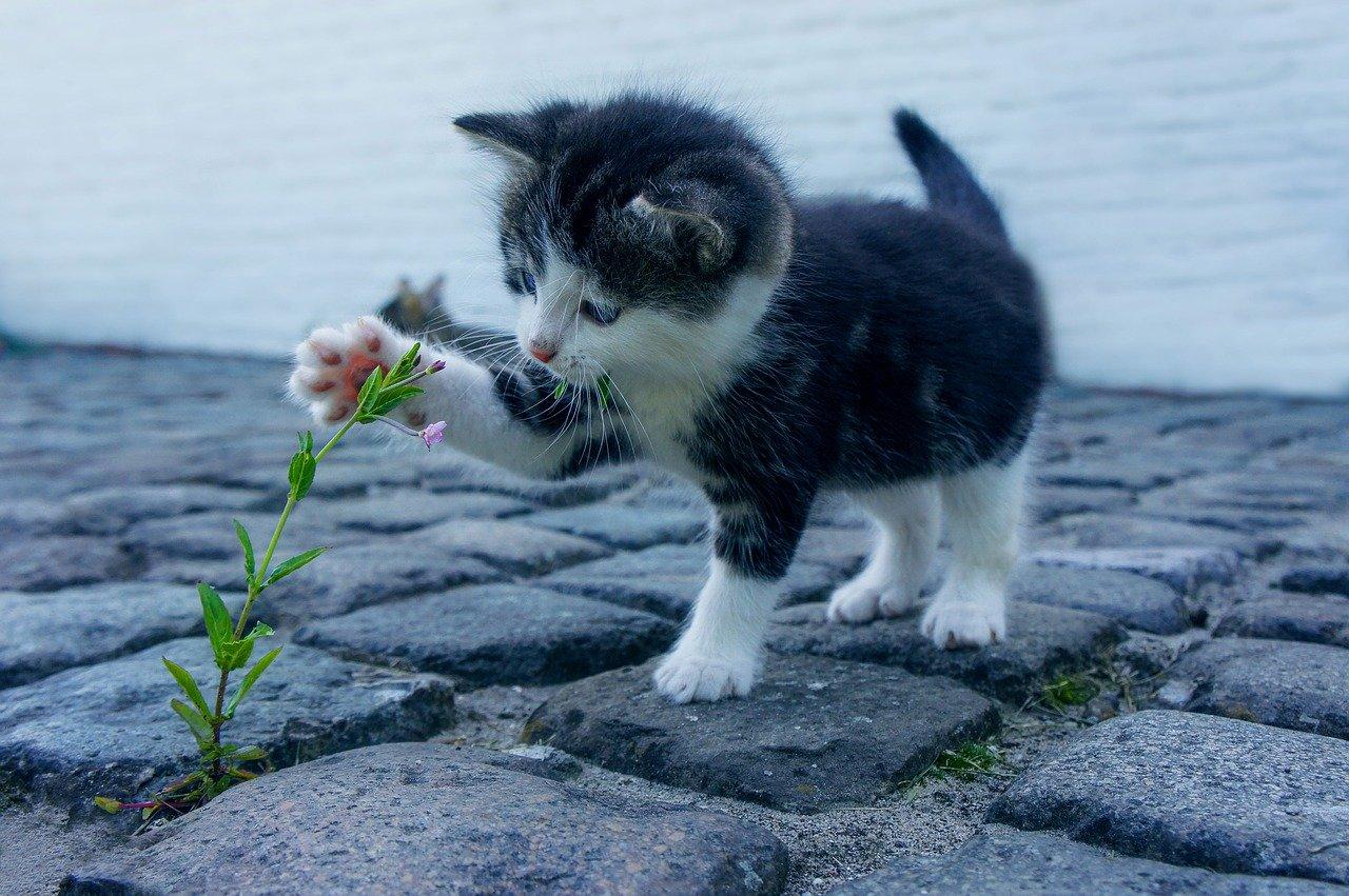 Naukowy zjazd dla kocich opiekunów