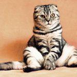 Praktyczne informacje dla opiekunów i miłośników kotów: Dzień Kota w Trójmieście