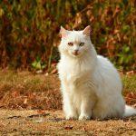 Pokaz kotów rasowych w CH Osowa