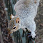 Dzięki marce Felix w Krakowie pojawią się karmniki i poidełka dla wiewiórek.