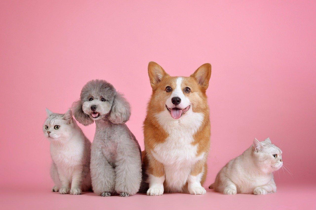 Popularne rasy małych psów